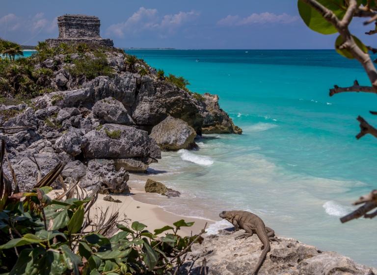 Leguan, skildpadde-stranden og Vindgudens Tempel i baggrunden.
