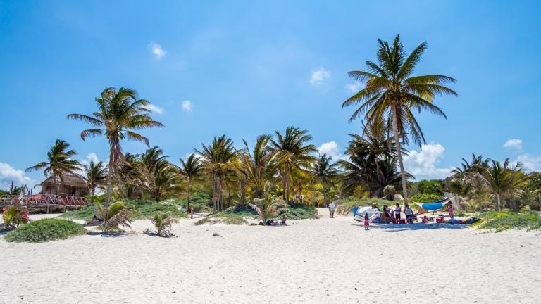 Palmer ved playa maya stand.